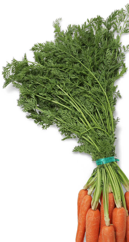 porkkananvarret